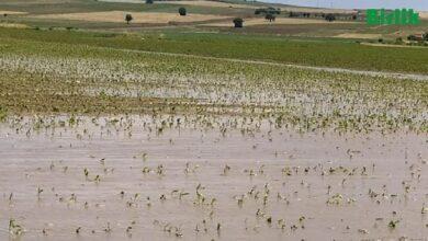 Photo of Dolu ve Sel Suları Zarara Yol Açtı